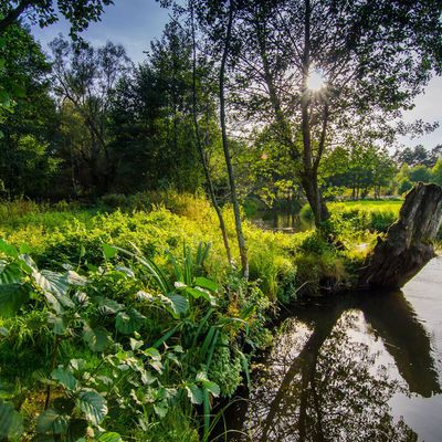 Galeria Rzeka Omulew